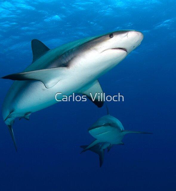 Sharks by Carlos Villoch