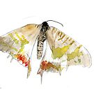 Impressions of a Madagascar Sunset Moth by Joel Borgerson