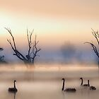 Black swans  by Jessy Willemse