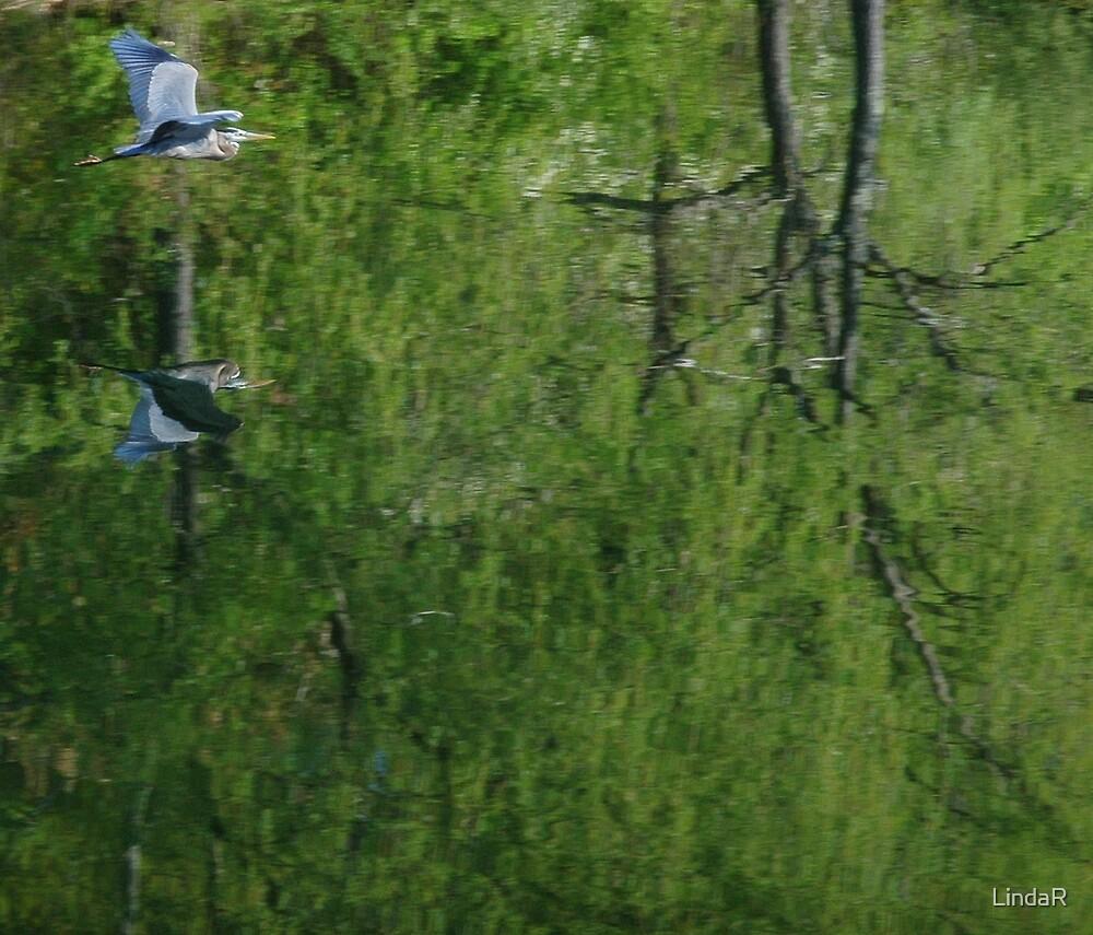 Reflective flight... by LindaR
