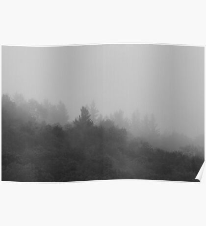 Trees in the Mist BW Poster