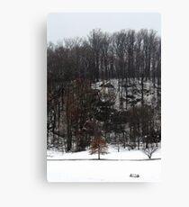 Spring Snowstorm Canvas Print