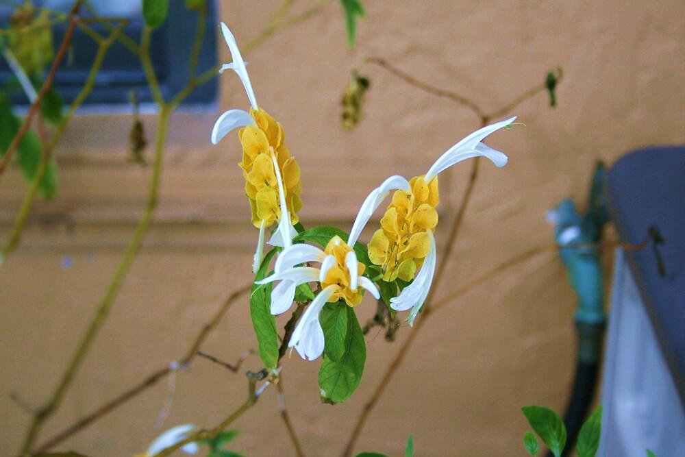 Flower in yard by photo4sale