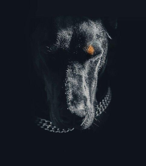 Doberman by LilaVert