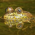 Frog reflections by Anthony Goldman