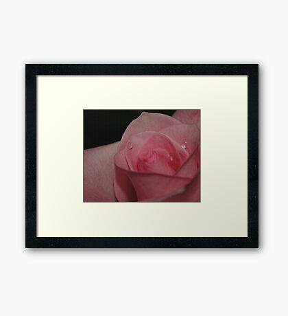A Tearful Rose Framed Print