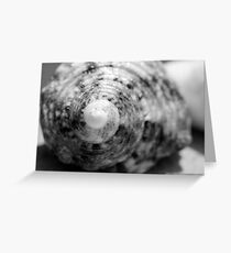 Black and white seashell capture Greeting Card