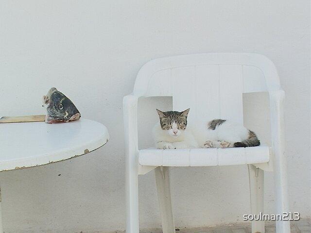 Cat's Tale by soulman213