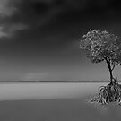 Low Tide.....The Mangrove Tree in B&W by Imi Koetz