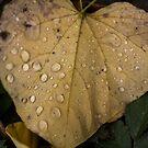 Autumn Rain by Sharlene Rens