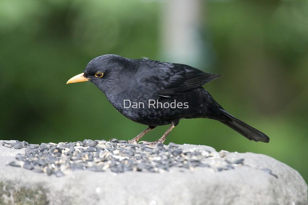 BlackBird by Dan Rhodes
