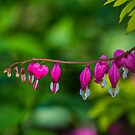 Pink Hearts by Sharlene Rens