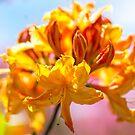 Neon Bloom by Sharlene Rens