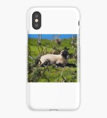 Sheep in th Sun iPhone Case/Skin