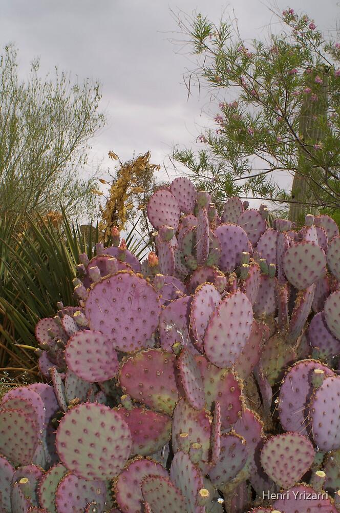 Arizona Desert Cactus by Henri Irizarri