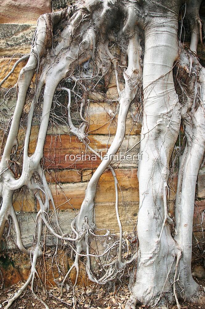 Bare Roots by Rosina  Lamberti