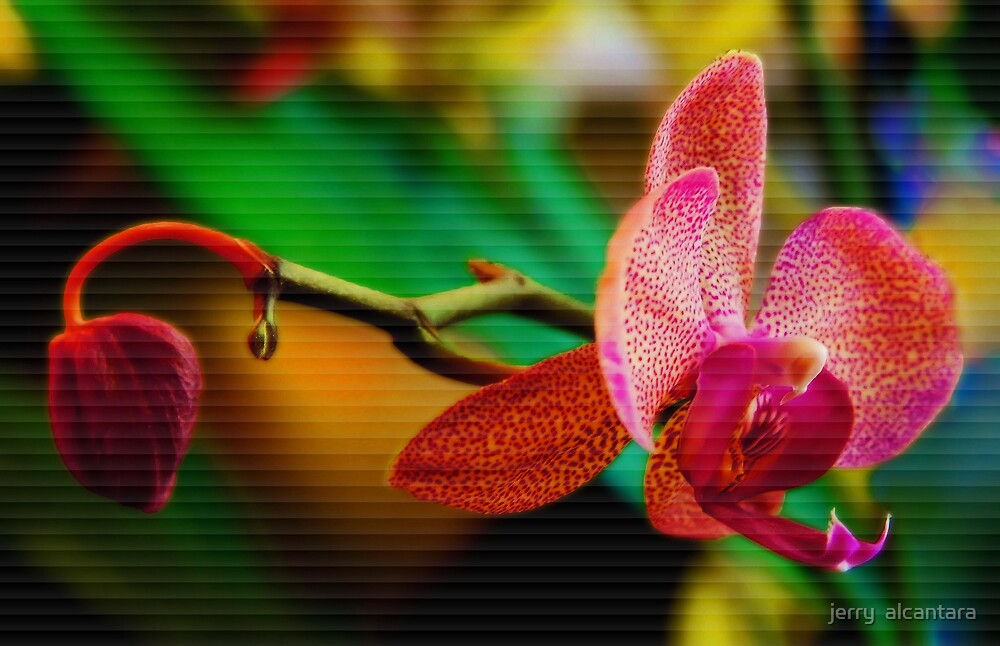 Orchid by jerry  alcantara