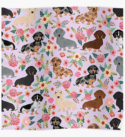 Dachshund floral flowers doxie dachsie dog breed pattern Poster