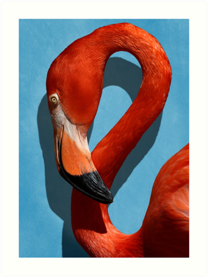 Studio Dalio - Orange Flamingo Profile on Blue Background Art Print