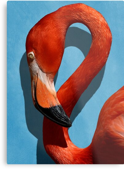 Studio Dalio - Orange Flamingo Profile on Blue Background Metal Print