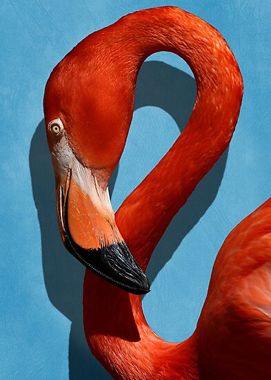 Studio Dalio - Orange Flamingo Profile on Blue Background Photo Print