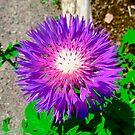 Purple Flower by Shulie1