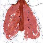 Moth by John Douglas