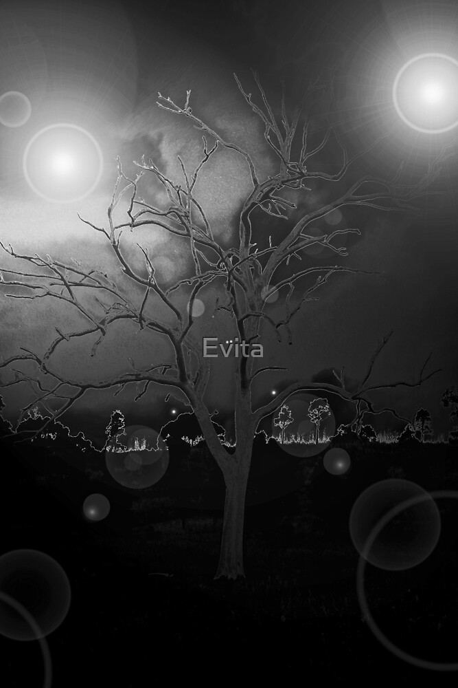 Bewitched Tree by Evita