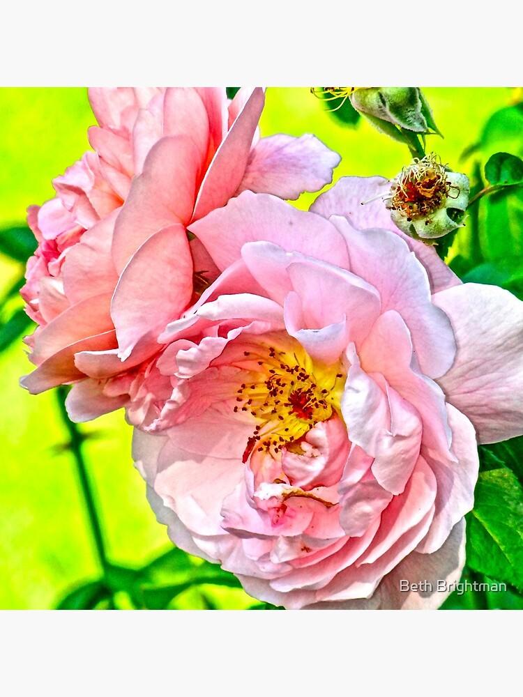 Pretty in pink by BBrightman