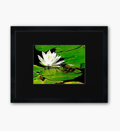 Basking in the reflection Framed Print