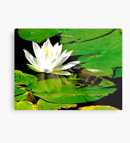 Basking in the reflection Metal Print