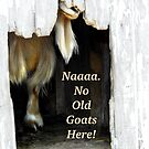 No Old Goats Here! by Beth Brightman