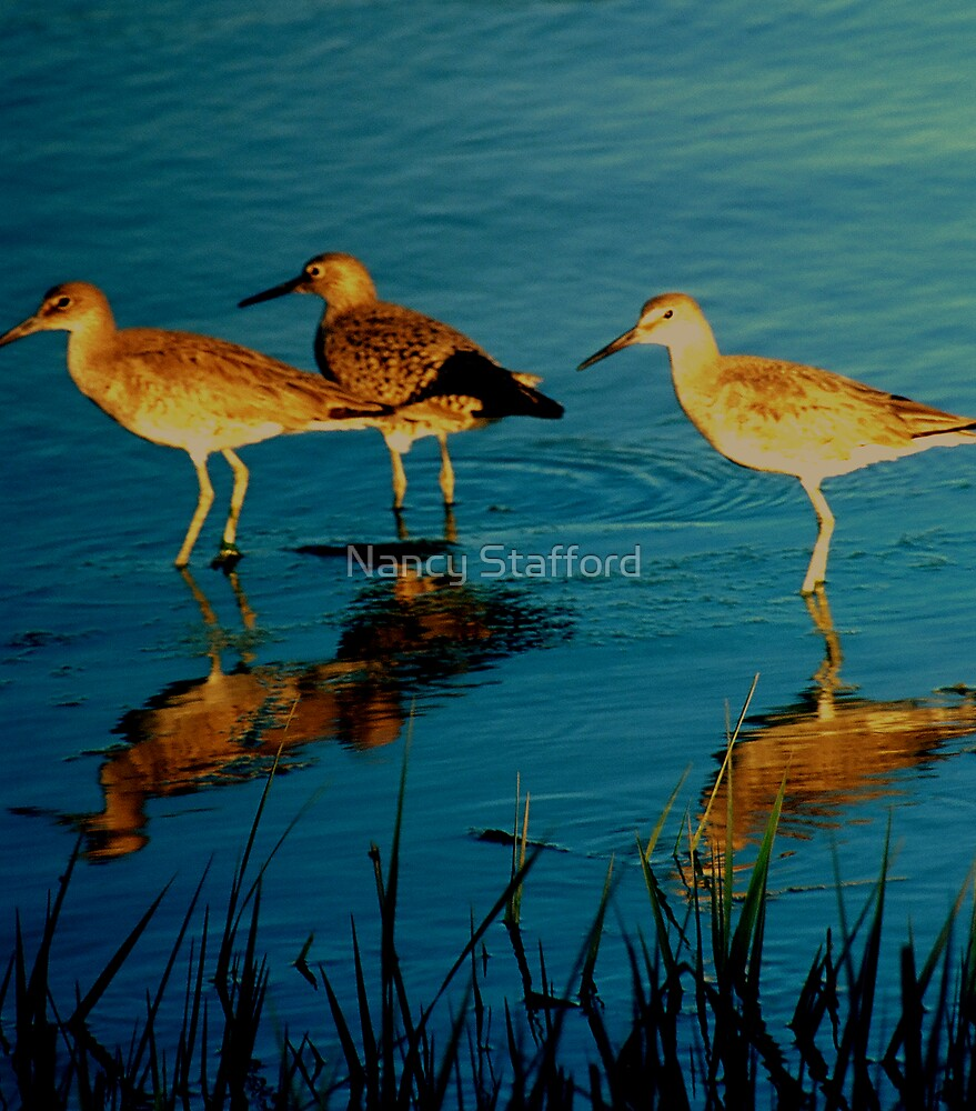 Ibis Water Birds by Nancy Stafford