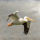 Pelican In Flight by Bo Insogna