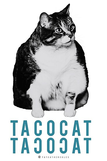 Fat Cat - Taco Cat - Blue Cat by fatcathercules