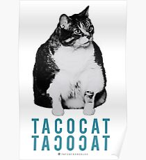 Fat Cat - Taco Cat - Blue Cat Poster