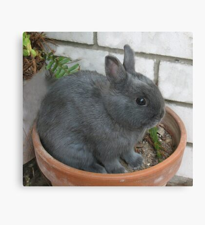 I am a Little Potted Bunny Rabbit Canvas Print