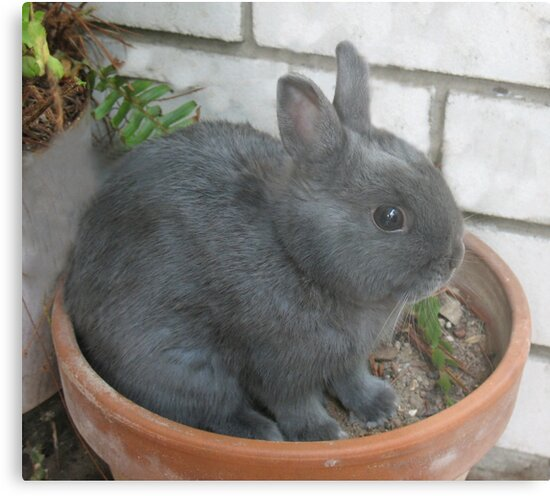 I am a Little Potted Bunny Rabbit by Michael John