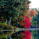 Falling into Autumn by Beth Brightman