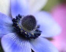 Anemone by Darren Post