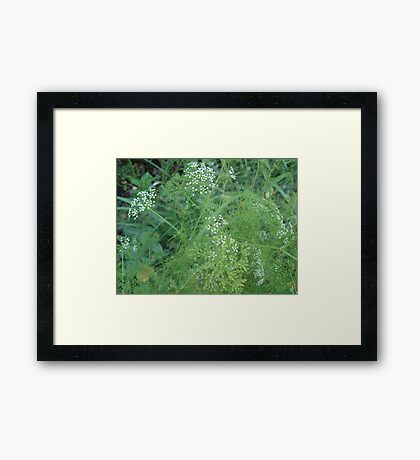 Wild Carrots (I think) Framed Print