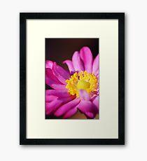 Morning Flower: Macro Photography Framed Print