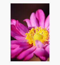 Morning Flower: Macro Photography Photographic Print