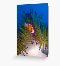 Anemonefish Greeting Card