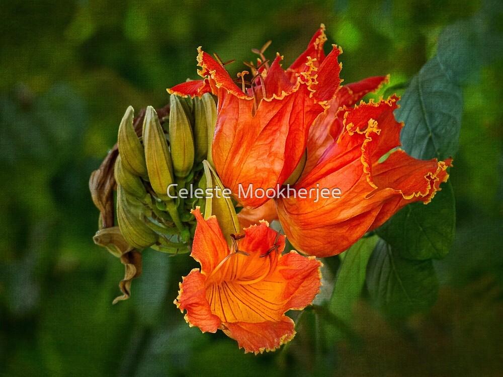 African tulip tree blossoms by Celeste Mookherjee