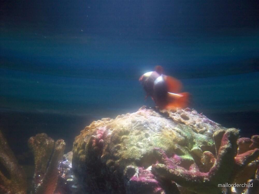 Clown Fish by mailorderchild