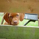 I Can See You by Bob Taylor