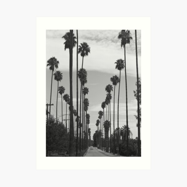 Vintage Black & White California Palm Trees Photo Art Print
