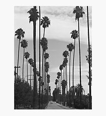 Vintage Black & White California Palm Trees Photo Photographic Print