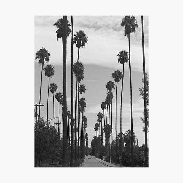 Vintage Black & White California Palm Trees Photo Photographic Print